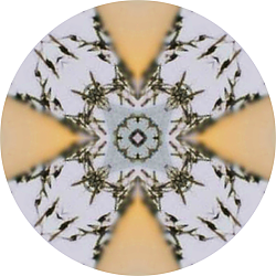 mandala of seagulls